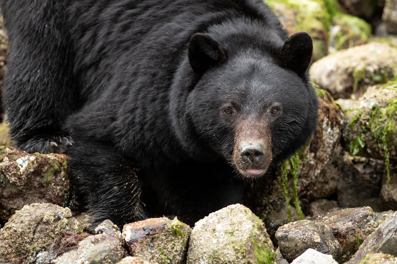 Black Bear spotted on Wildlife Excursion